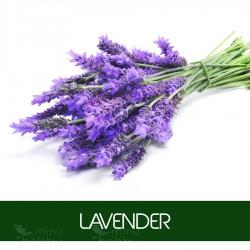 Aroomiõli Lavender